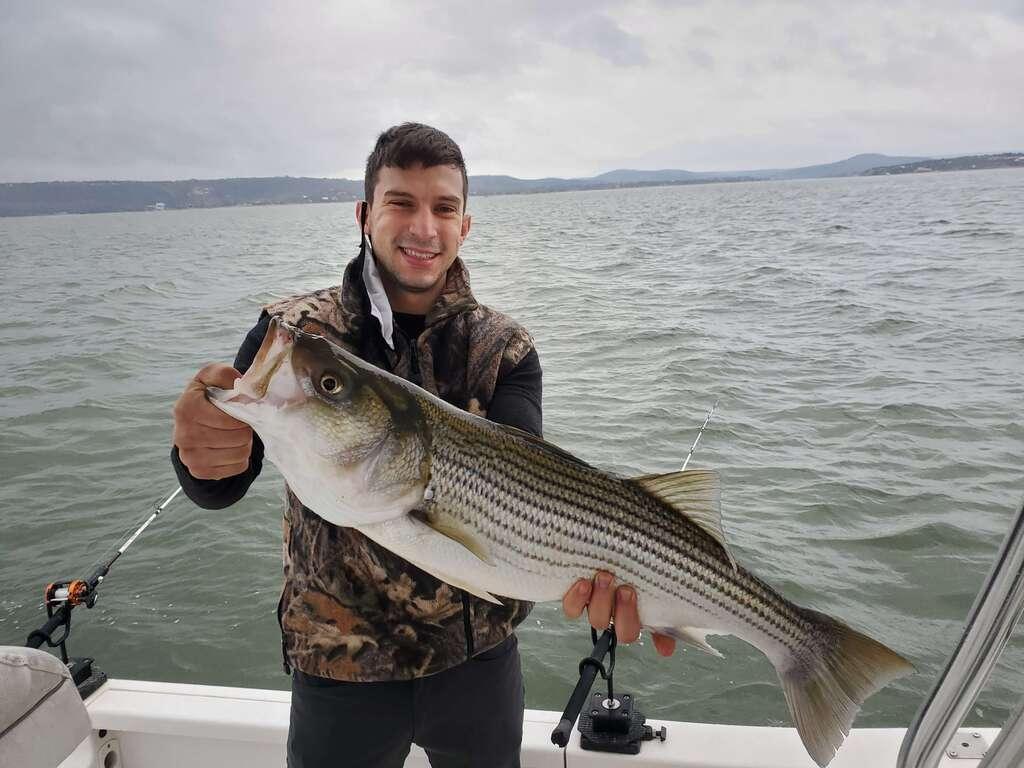 White Bass on Lake Buchanan