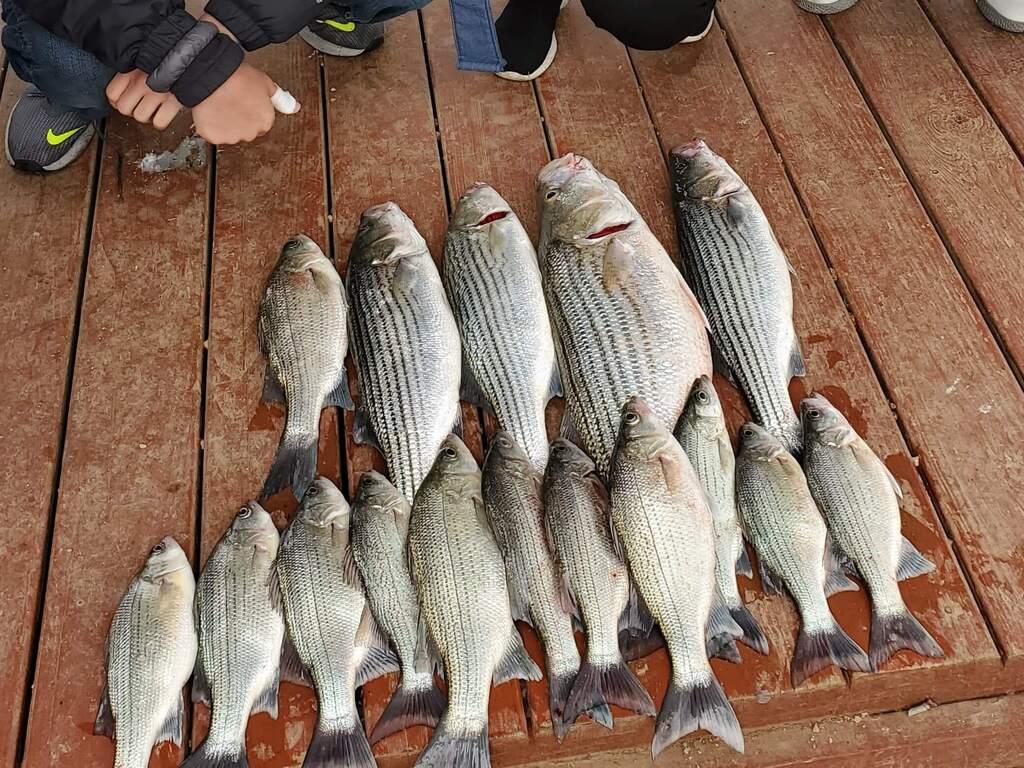 Fish Caught on Lake Buchanan