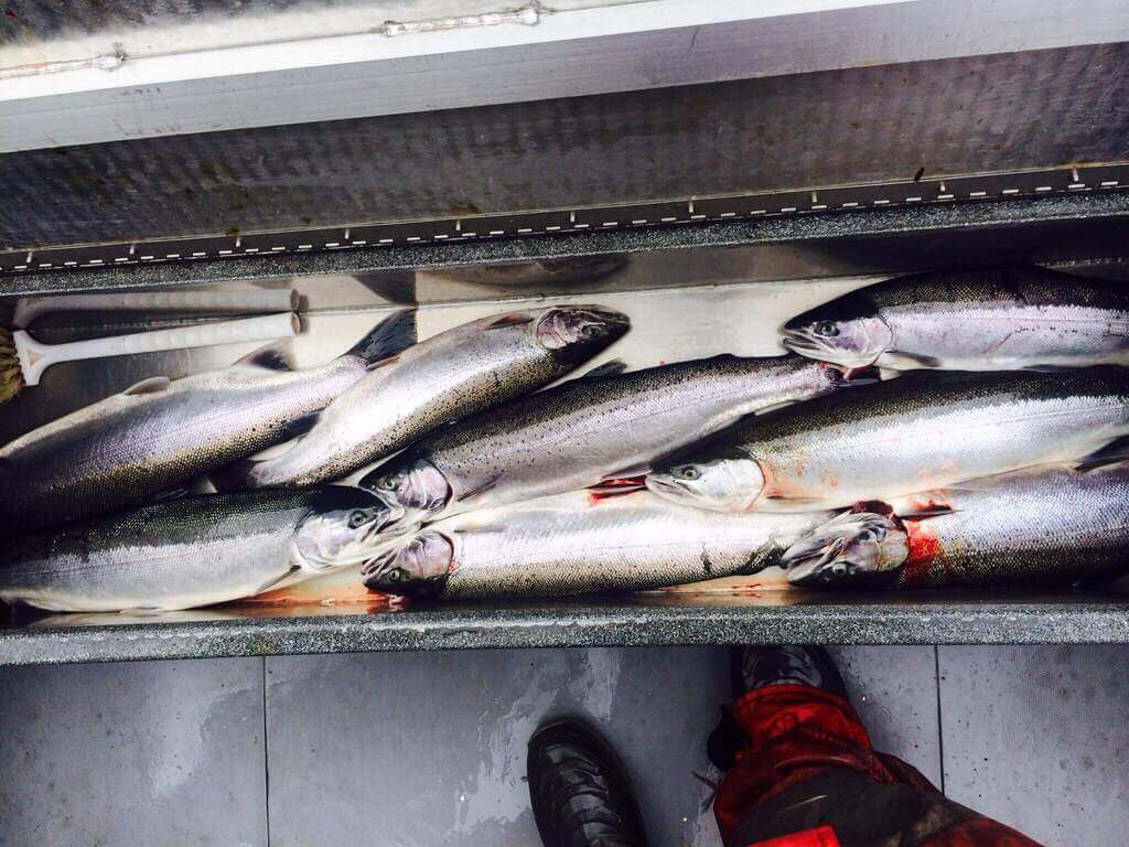 Fish Caught on Colwitz River