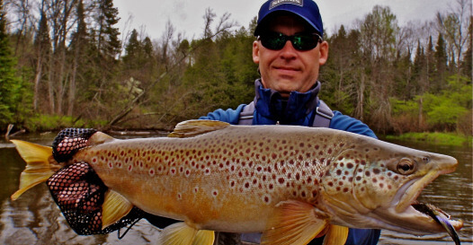 Brown Trout on Muskegon River