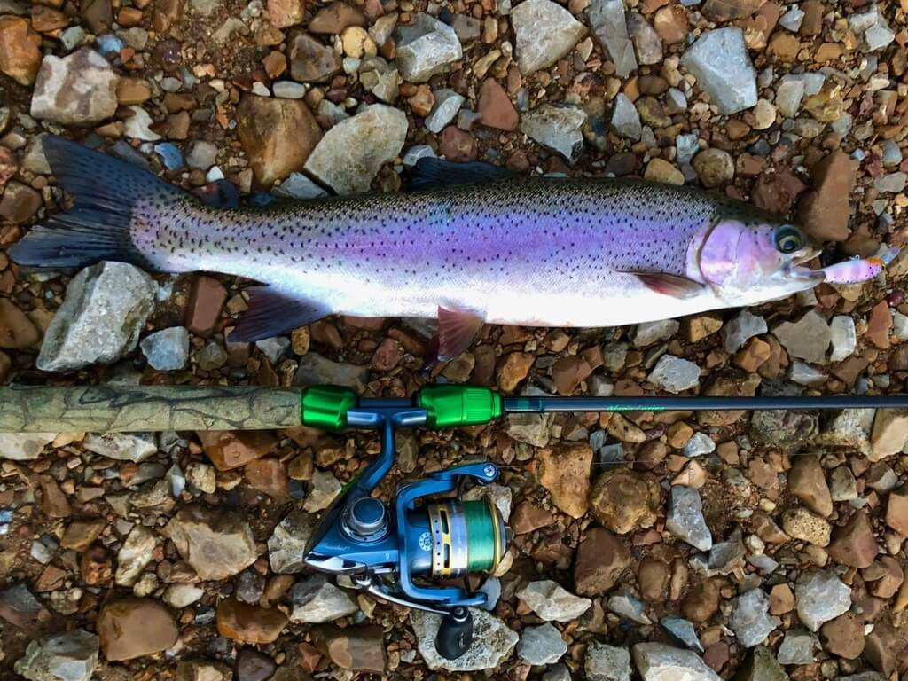 Best Fishing Gear for Lake Taneycomo