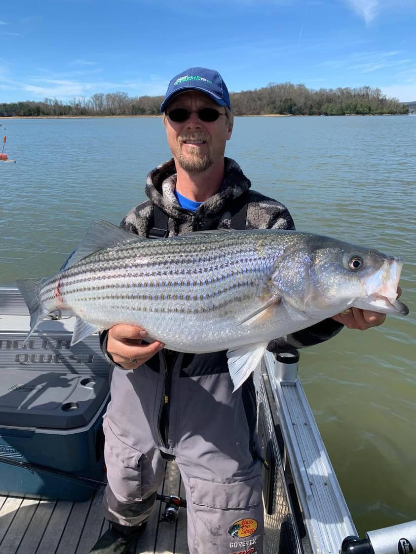 Big Striper On Cherokee Lake