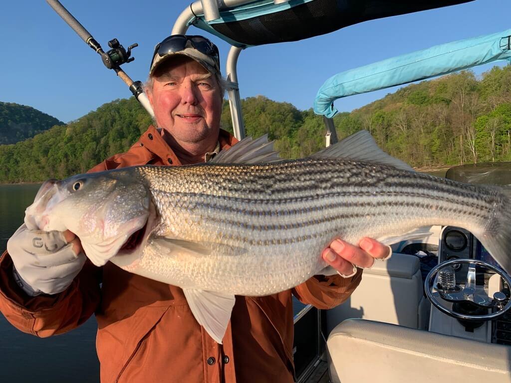 Striped Bass On Lake Cherokee