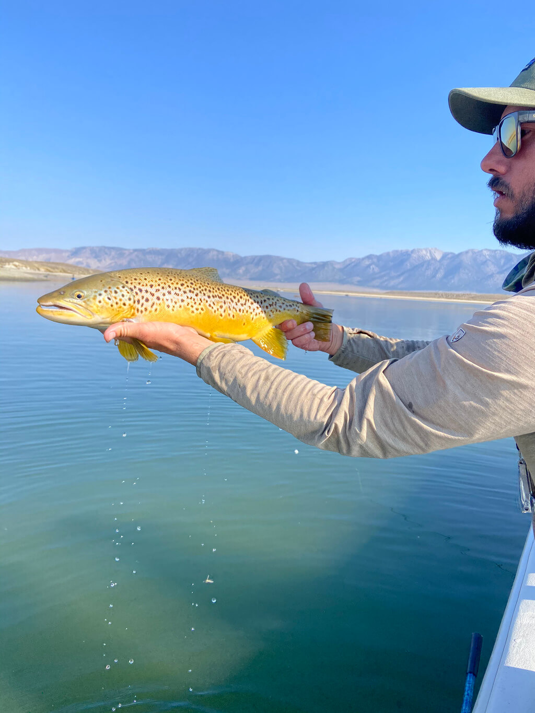 Crowley Lake Fish Types