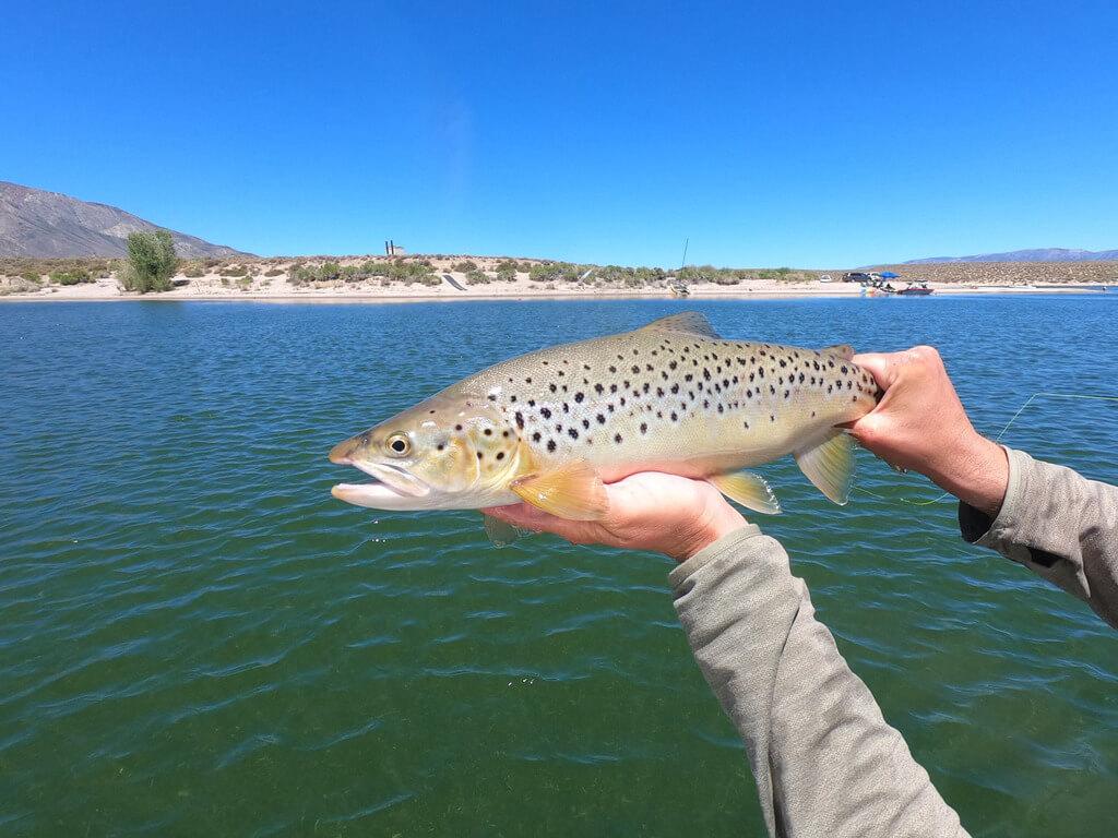 Crowley Lake Local Fishing Guide