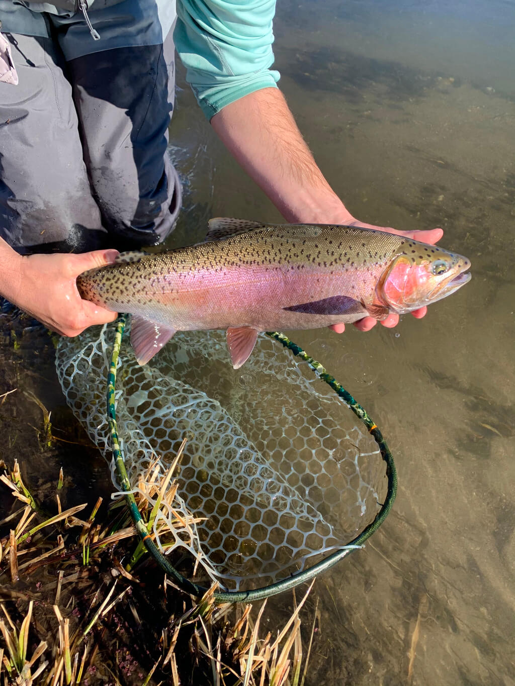 Fish Caught on Upper Owens River