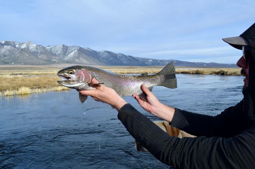 Upper Owens River Fishing